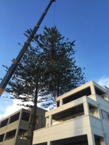 crane tree removal services Central Coast NSW