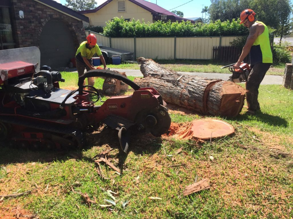 tree stump grinding services North of Sydney