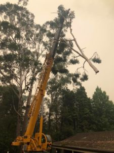 crane tree removal services